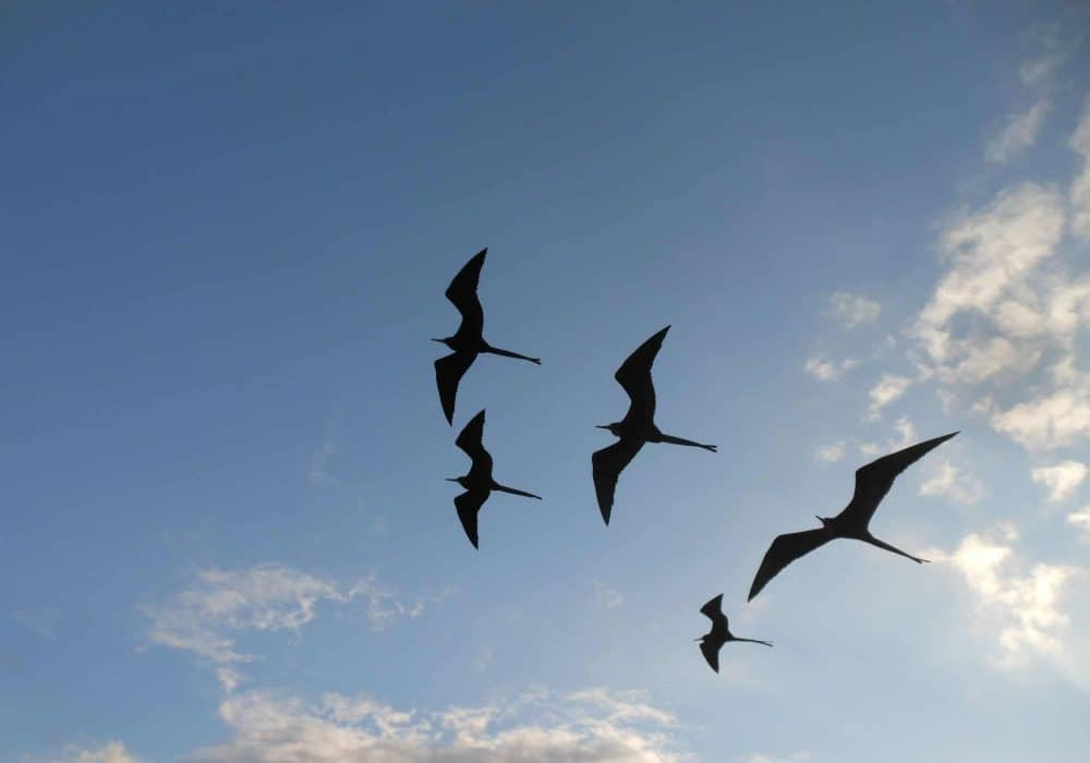 five birds in flight